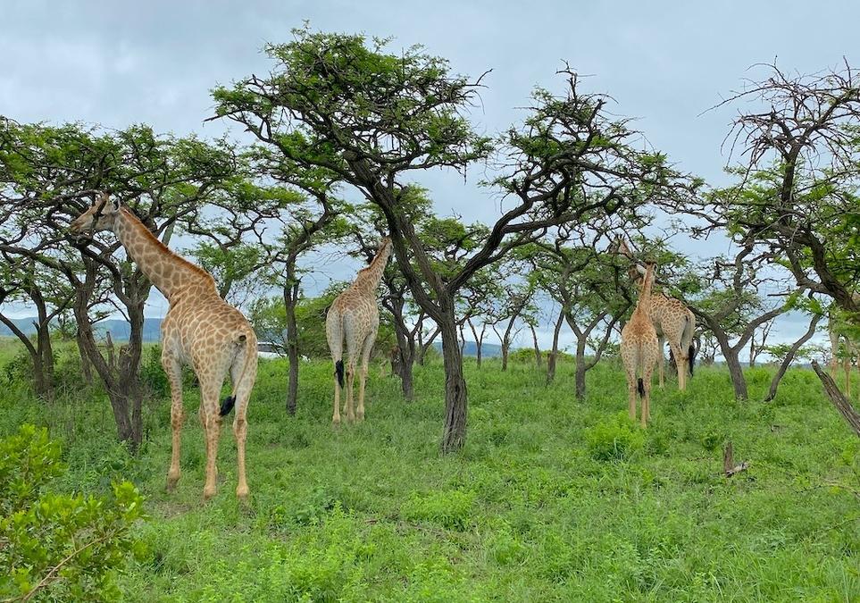 Südafrika & Namibia mit AIDAmira